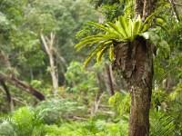 Rainforest Canopy Plants   www.pixshark.com - Images ...