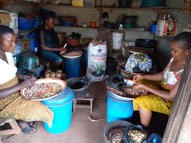 Mrs Emeka Agatha right and Mrs Odoh Helen left with other women picking cashew nuts at Obollo Afor cashew nuts park