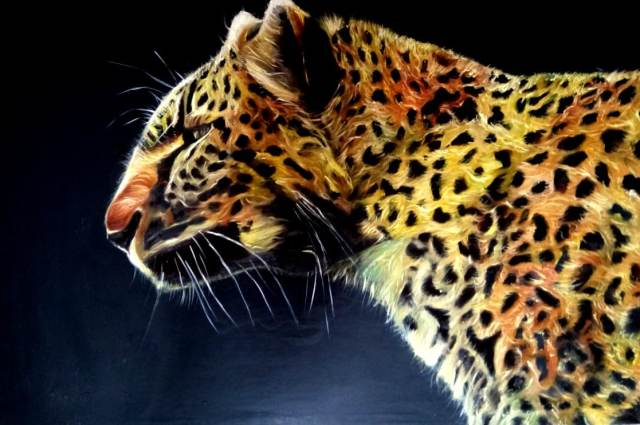 Paintings - Tiger