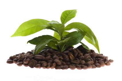 Jak pomáhá zelená káva nejen s hubnutím?