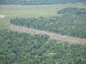 Desflorestamento na região de Eirunepé, limitrofe à Terra Indígena Vale do Javari. Crédito: Rieli Franciscato / Acervo FPEVJ_CGIIRC_FUNAI_2009