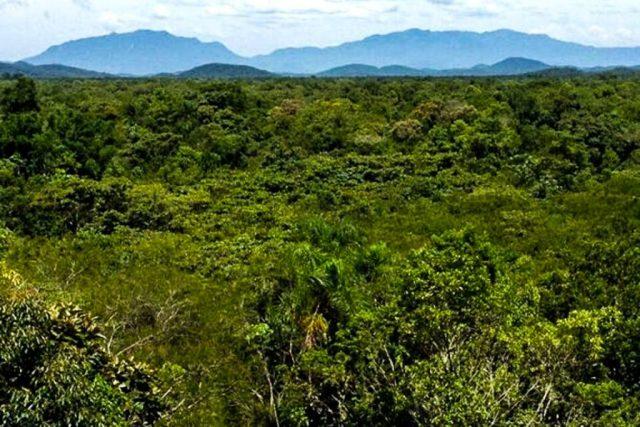 Floresta regenerada no Paraná. Foto: Robin L. Chazdon