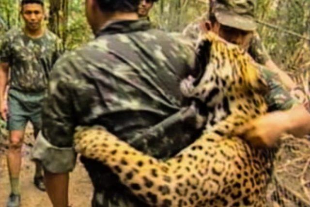 Onças-pintada ataca repórter enquanto, que é salvo por militares. Felizmente, não houve ferimentos nem o animal foi abatido. Foto: Captura de vídeo YouTube