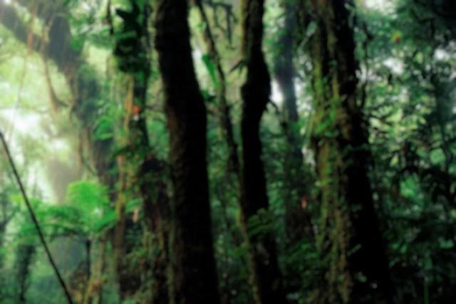 23082016-rainforest-b