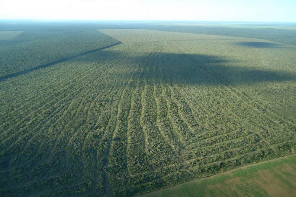 Plantio de soja em área embargado no Mato Grosso. Foto: Ibama.