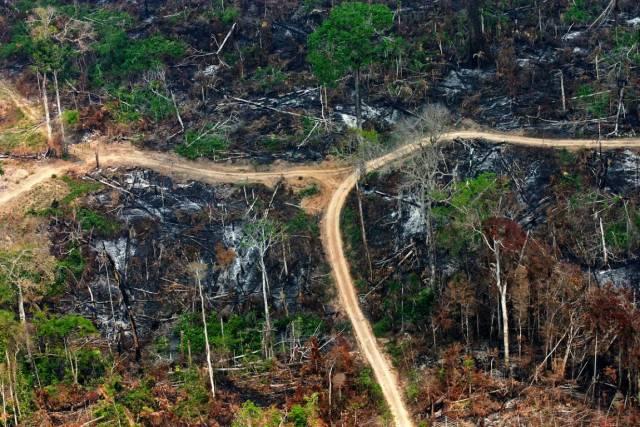 Estradas ilegais em áreas da Floresta Nacional do Jamanxim recém queimadas. Unidade sobre com grilagem de terras. Foto: Daniel Beltra/Greenpeace.