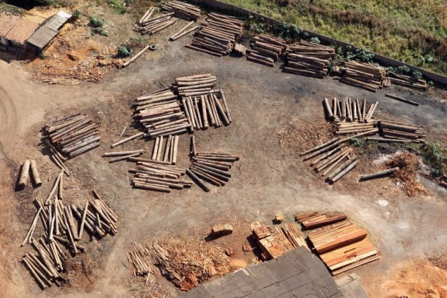 Desmatamento ilegal entrou na mira do MPF. Foto: Felipe Werneck - Ascom/Ibama