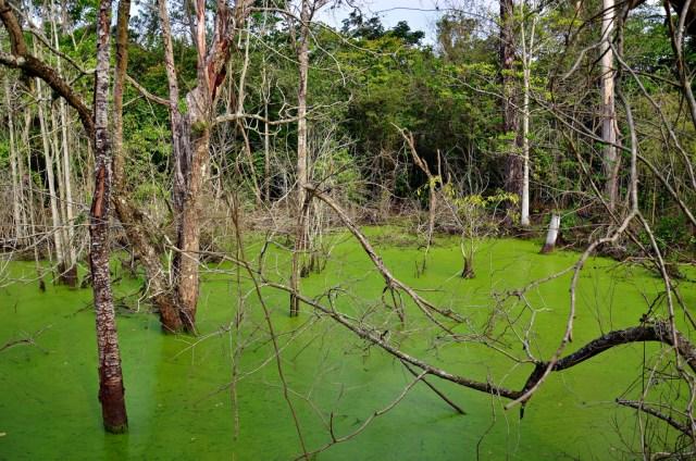 A Floresta Nacional Mário Xavier fica no município de Seropédica, Rio de Janeiro. Foto: Gian Cornachini/Flickr.