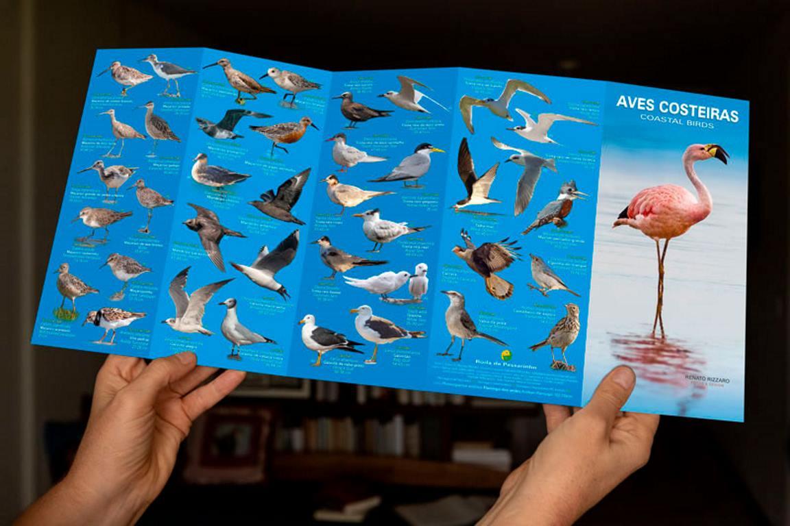Guia: as aves da costa brasileira - ((o))eco