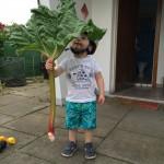 Unser Rhabarber ist genauso groß wie Bubba. Die Blätter sind größer als der Grill.