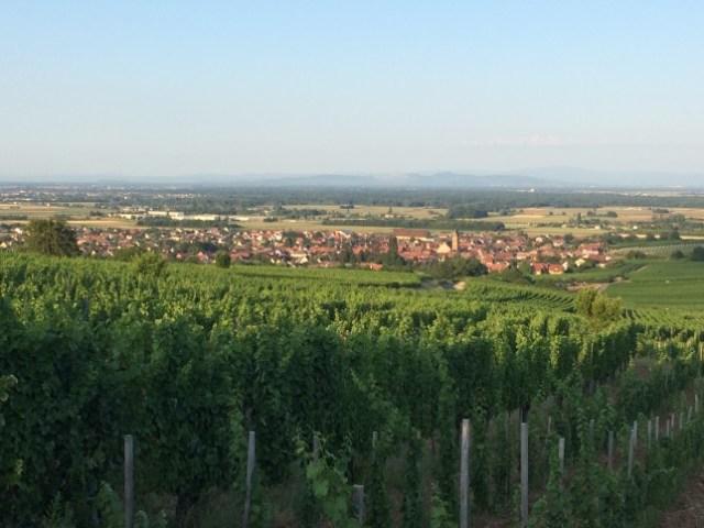 Vue d'Eguisheim en fin de journée depuis le Grand Cru Pfersigberg