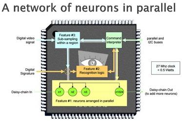 Cognigen Neuron Network