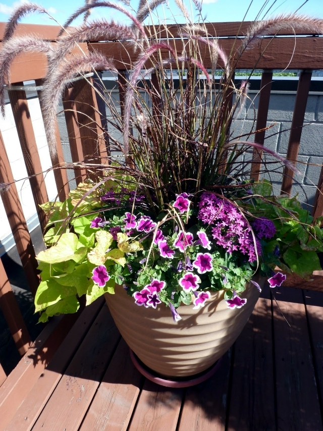 Plant Breeding balcony  beautiful flowers combined in pairs  Interior Design Ideas  Ofdesign