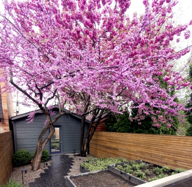 Garden Design Ideas – The 10 Best Trees For Small Gardens