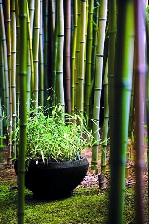 Yes Bamboo Garden Do At Home – Important Garden Design Ideas