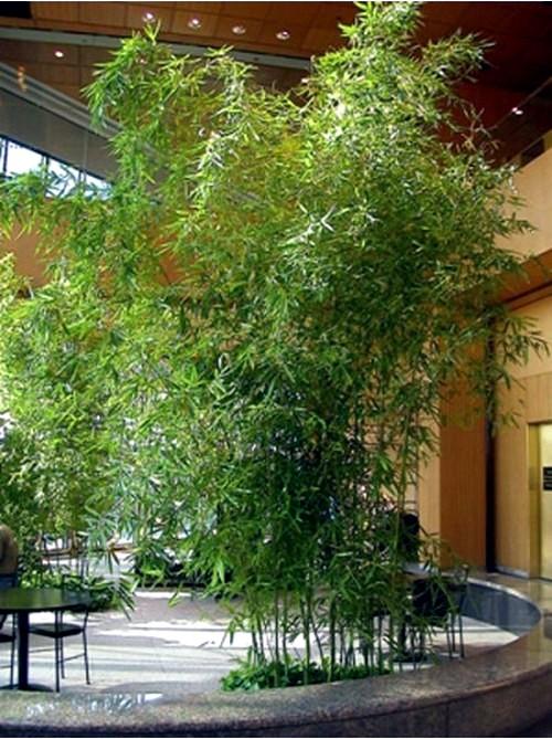 Yes Bamboo Garden Do At Home Important Garden Design
