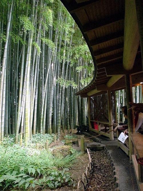 Home Design Ideas bamboo garden design on bamboo4sale com bamboo