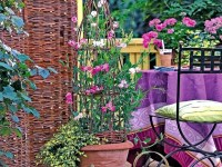 Balcony planting flowers  colorful oasis in the cold ...