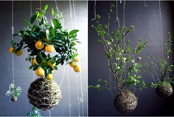 20 Ideas For Hanging Flower Pots – Indoor Plants Exhibit Creative