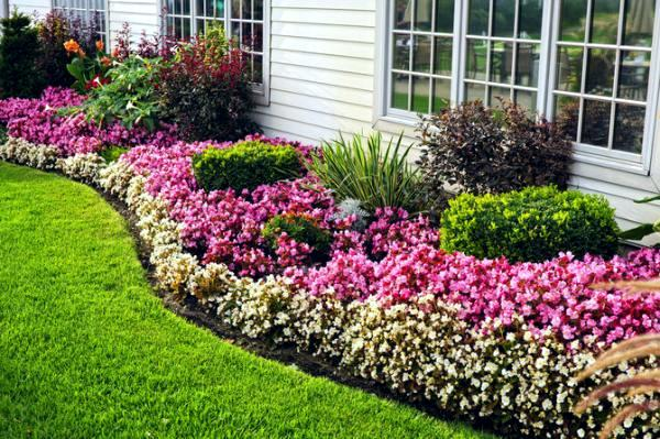 Images Narrow Planting Beds