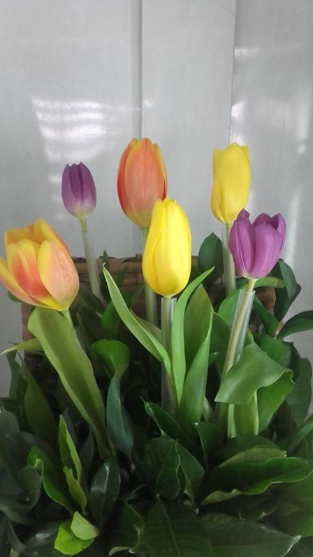 TULIPANES de colores para regalar a tu mami