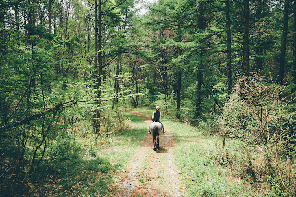 Gemischter Nadelwald