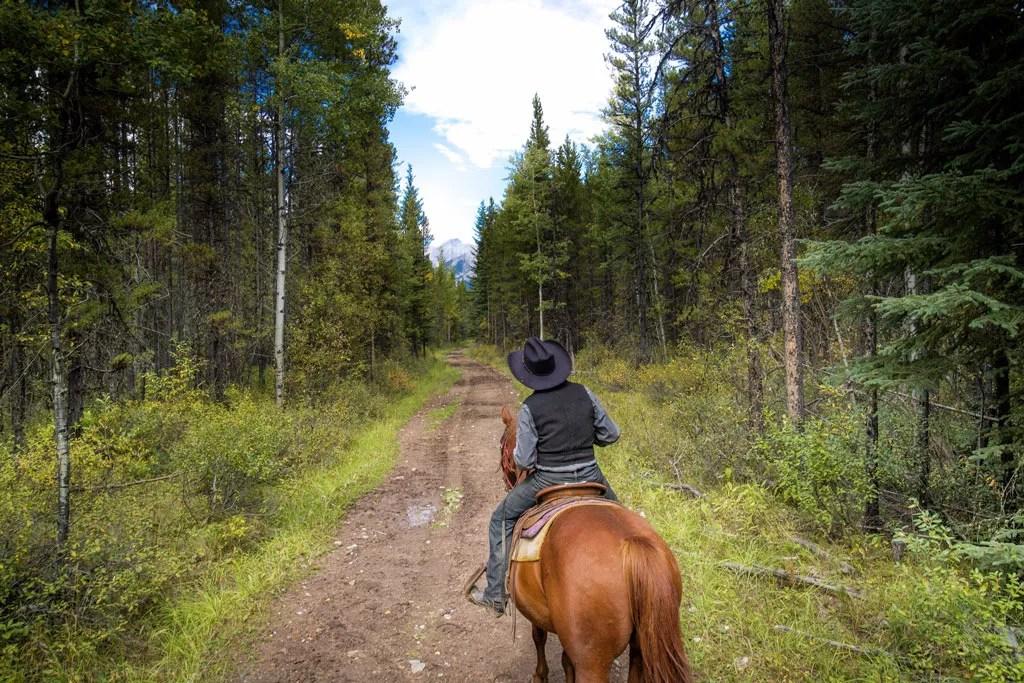 Kanadische Rockies - Pferd