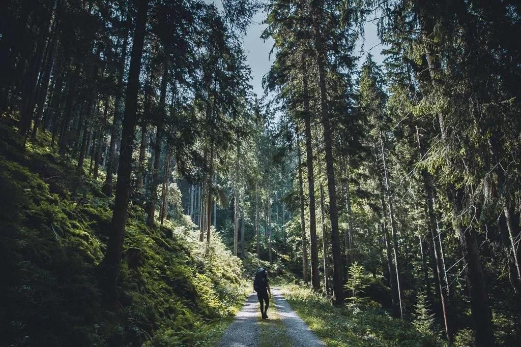 Tropische und subtropische Nadelwälder