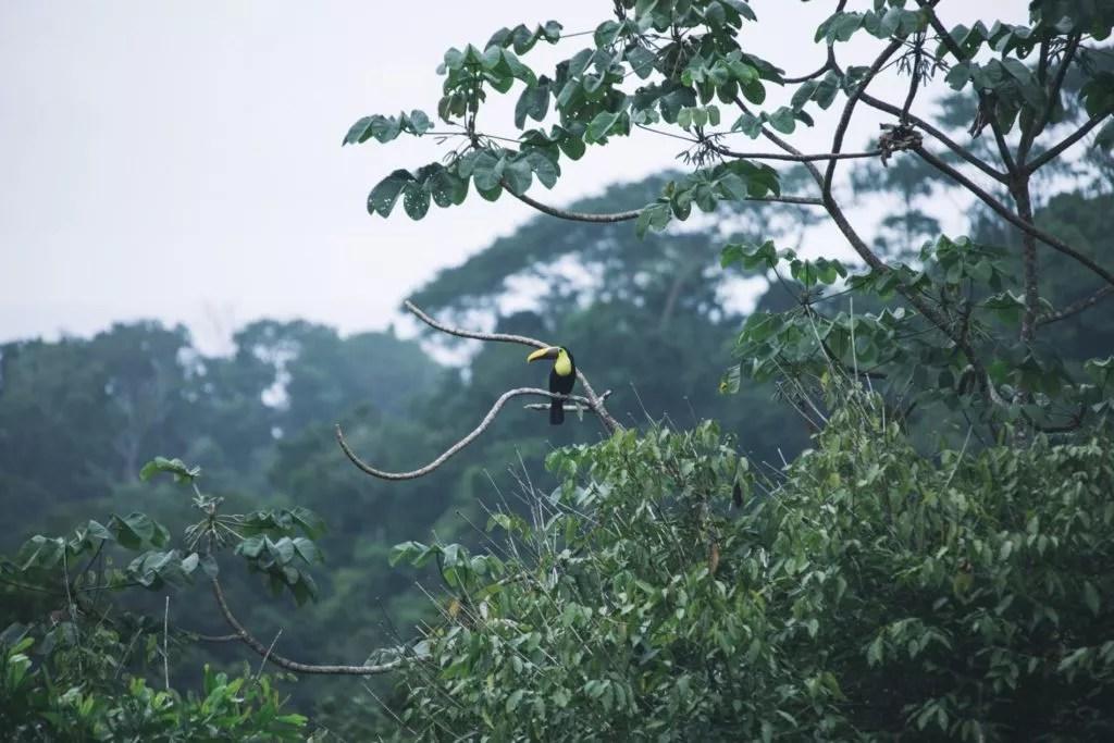 Ein Vogel sitzt auf dem Baum