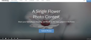 single-photo