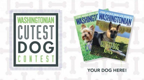 Washingtonian Cutest Dog Contest