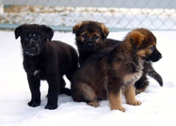Rcmp-Puppy-Naming-Contest