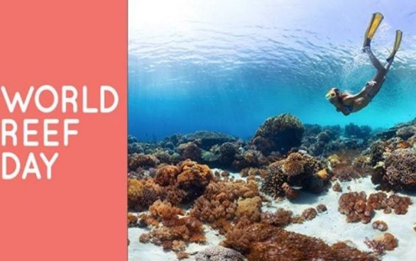 World-Reef-Day-Sweepstakes