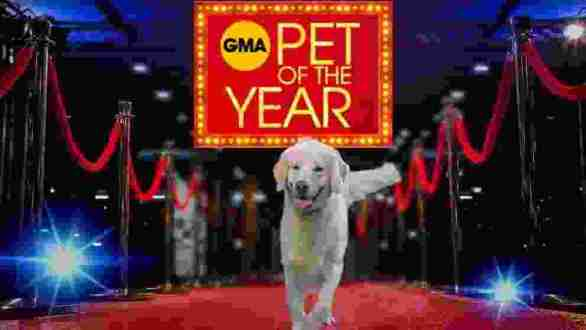 GMA-Pet-of-The-Year-Contest