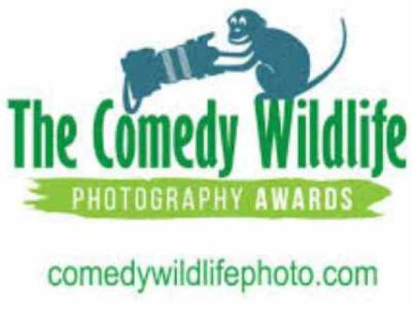 Comedy-Wildlife-Photography-Awards-Contest