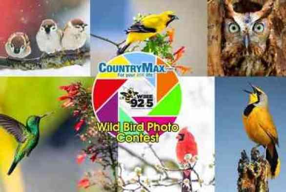 WBEE-Wild-Bird-Contest