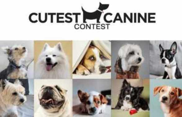 Newsday-Cutest-Canine-Contest