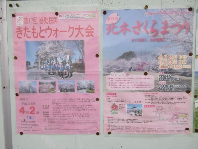 北本にある日本五大桜「石戸蒲ザクラ」①