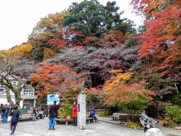 高尾山の紅葉④