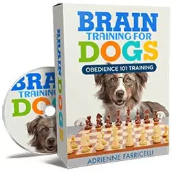 Obedience 101 Training
