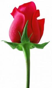rose-flower-ceremony