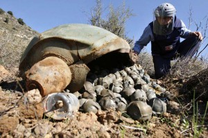 Mines Advisory Group (MAG) Technical Field Manager Nick Guest inspecting a Cluster Bomb Unit in the southern village of Ouazaiyeh, Lebanon (Thursday, Nov. 9, 2006) that was dropped by Israeli warplanes during the 34-day long Hezbollah-Israeli war. (Photo: Mohammed Zaatari)