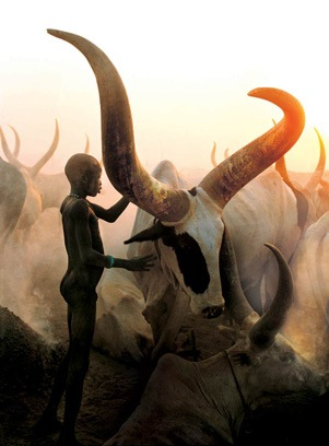 A cattle herd in Sudan.