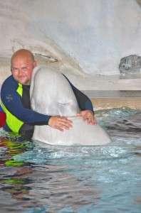 Beluga Whale Hug
