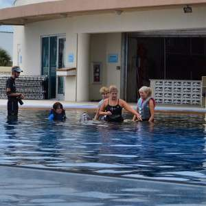 Guests interacting with the  in the water! No shows here at !