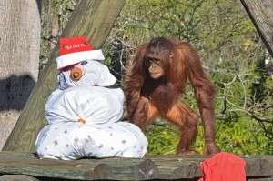 Presents for primates