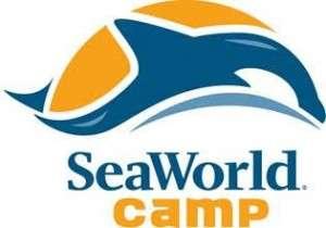 Seaworld Camp