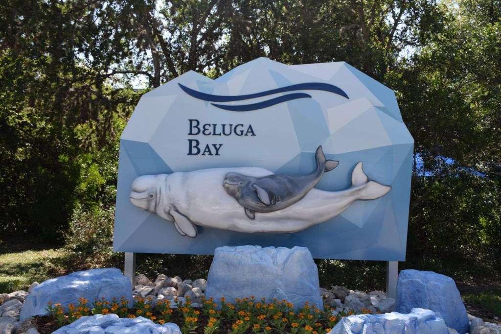 Beluga Whale Interaction