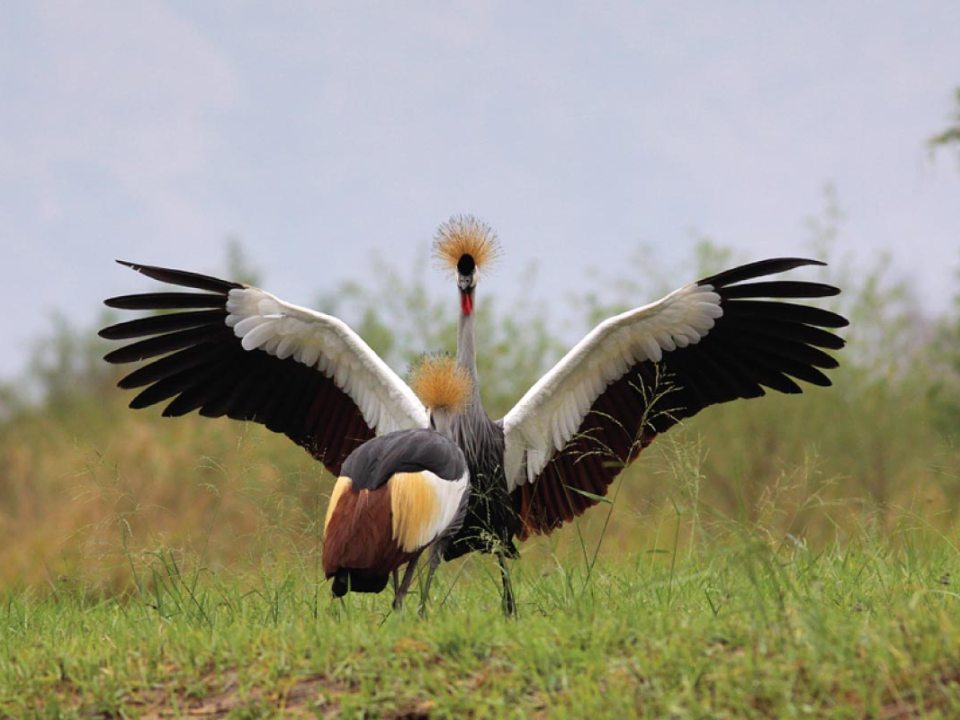 Uganda Pearl Africa - wildlife tours uganda - uganda bird watching - Discounted Uganda Safari Holiday
