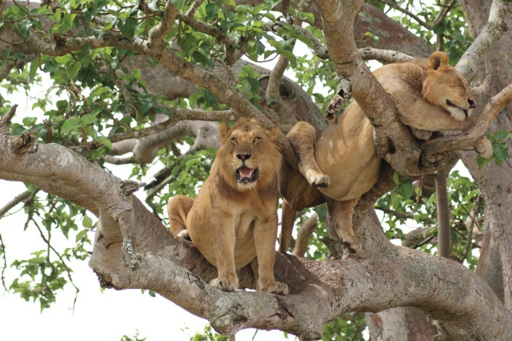 Uganda Wildlife & Primates Holiday